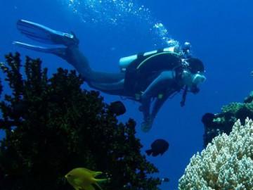 Visayas Dive Safari